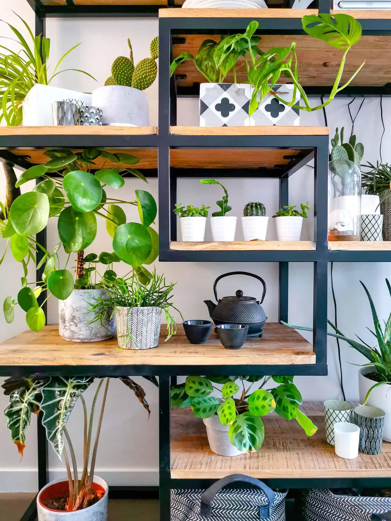 houseplant bookshelf pilea alocasia succulents prayer plant