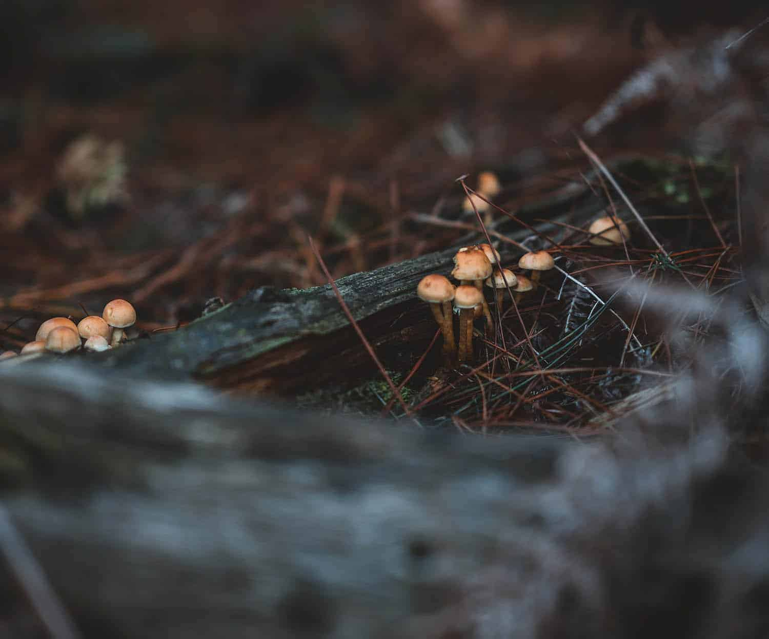 Money Trees And Mushrooms What Does Fungus Mean For Your